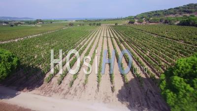 France, Var, Aerial View Of Vineyard At Ramatuelle - Video Drone Footage