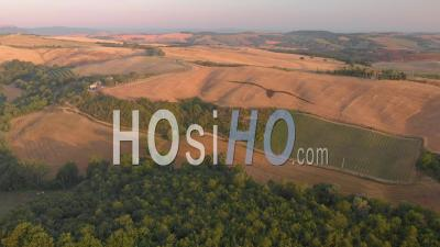 Aerial Landscape Of The D'orcia Valley In Tuscany With Vineries, Cypresses, Green Hills And Yellow Fields On Summer - Video Drone Footage