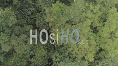 Forêt Tropicale En Martinique - Vidéo Drone