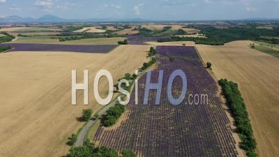 Champs De Lavande En Fleurs Sur Le Plateau De Valensole En été, Provence - Vidéo Par Drone