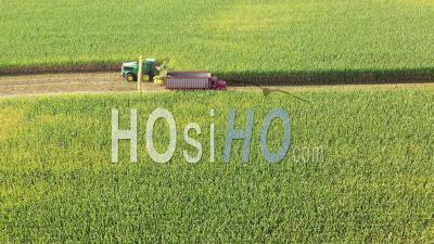 Corn Harvest - Video Drone Footage