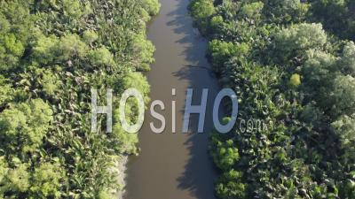 Aerial Look Down Mangrove Tree Live Along The River - Video Drone Footage
