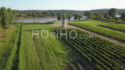 Vineyard On The Banks Of The Garonne, Video Drone Footage